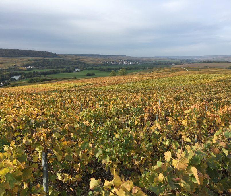 Champagne de vigneron - Léonidas Charpentier